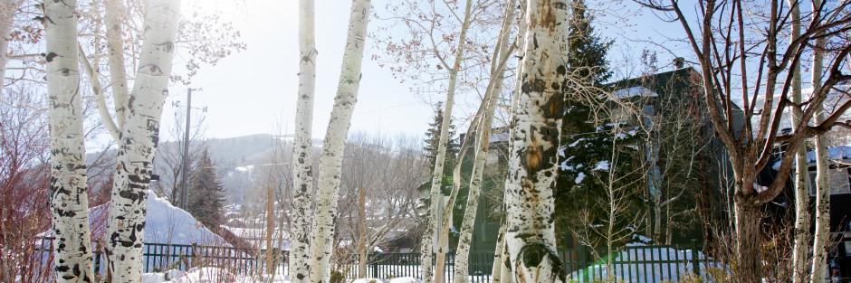 sunshine through aspen trees, snow