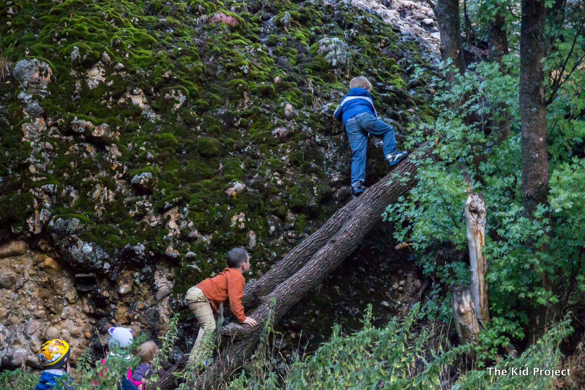 boys climbing trees, maple canyon