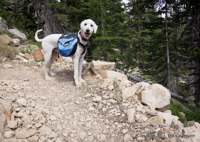 backpacking/hiking dog on trail