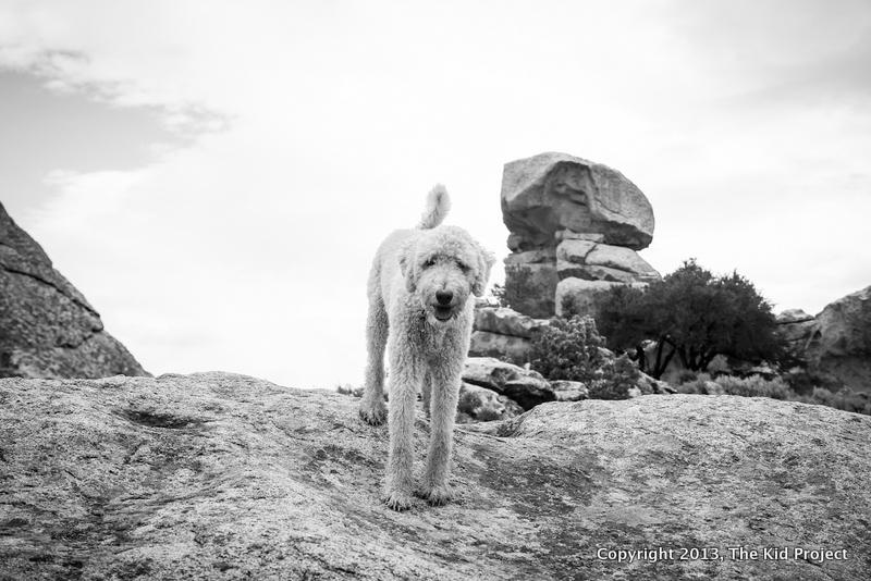 crag doggie