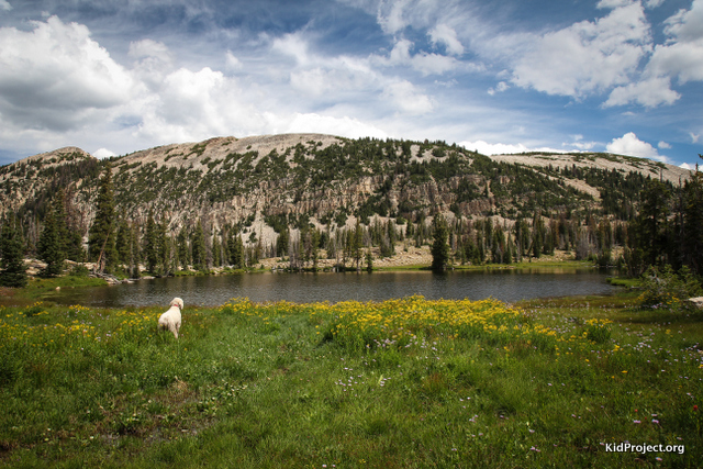 Dog looking over Booker Lake, Uintas