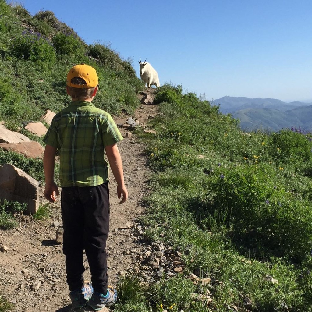 Encountering wildlife, goats while hiking