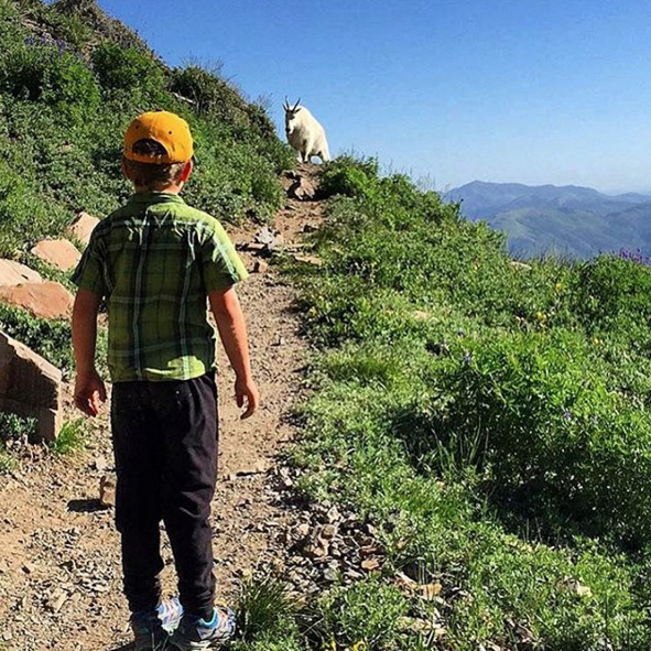 At age 7, my son summitted Mount Timpanogos, Utah. They spent one overnight, hiking 6-7 miles and 3,100ft of vertical gain the first day. The second day they summited and headed home, making for 12 miles and roughly 1,800 ft of gain.