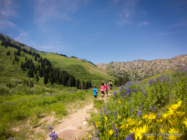 Albion Basin wildflower hike