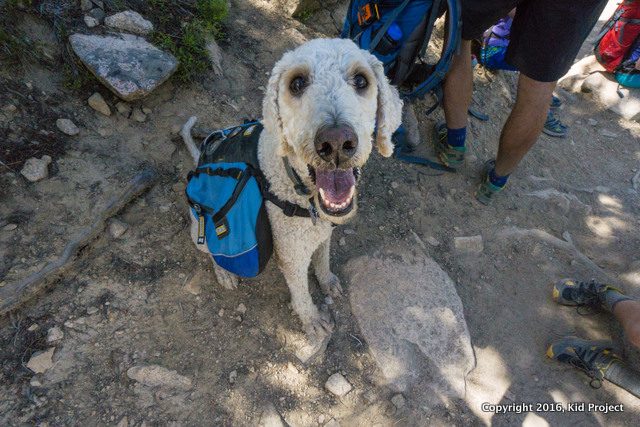 happy hiking dog and golden doodle