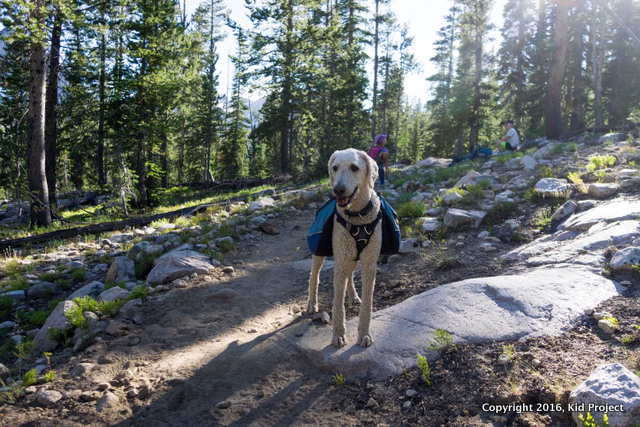 adventure dog backpacking in Idaho