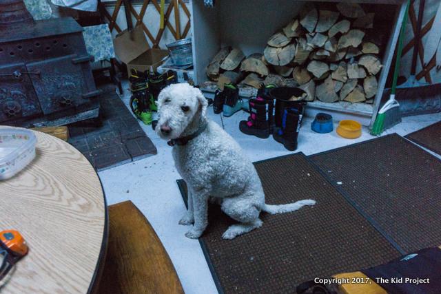 dogs yurts utah